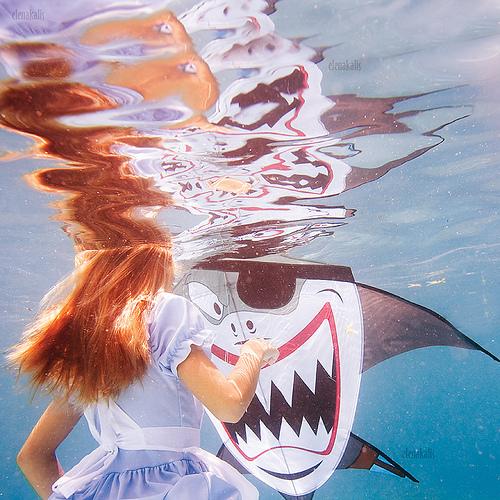 Cheshire Shark